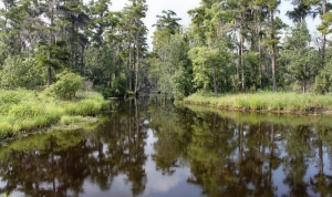 Seuls les alligators vous entendront crier Nadia Coste Bayou